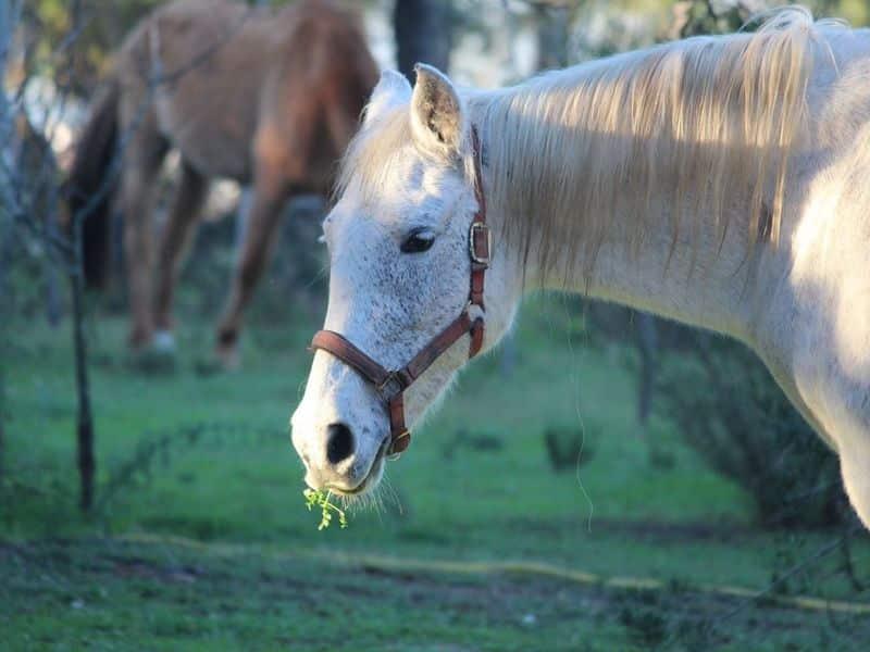 herdade monte do sol nature and rural tourism algarve portugal cavalos1